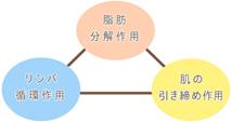 脂肪分解作用 リンパ循環作用 肌の引き締め作用