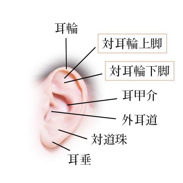 耳輪 対耳輪上脚 対耳輪下脚 耳甲介 外耳道 対道珠 耳垂